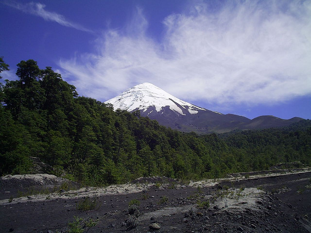 Behind forest Osorno volcano