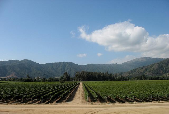 Casablanca Valley Chile