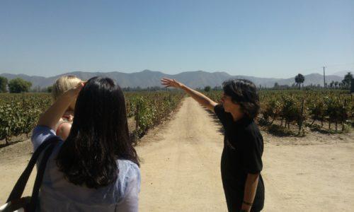 Undurraga vineyards docent Chile