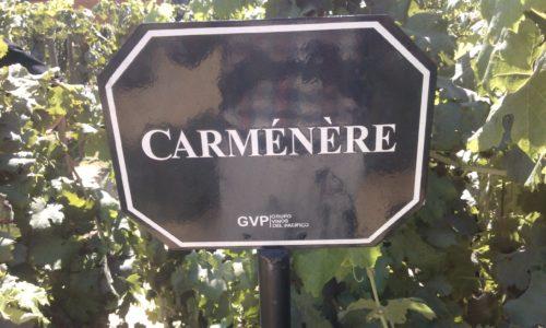 Undurraga vineyard - famous Carmenere Chle
