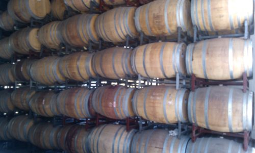 Undurraga vineyard - oak barrels Chile