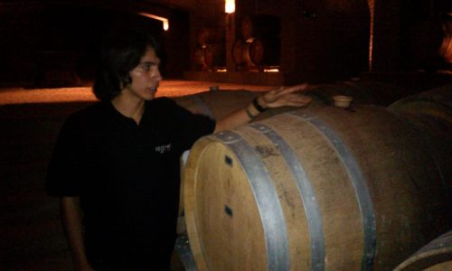 Undurraga vineyard - teaching about the process Chile