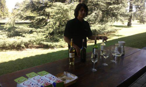 Undurraga vineyard best wines Chile