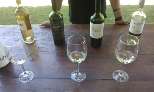 Undurraga vineyard - tasting Chile