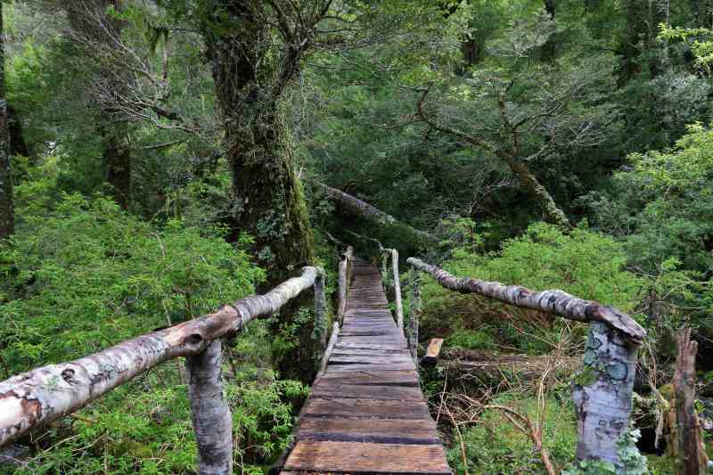The Enchanted Forest Patagonia Chile Adventures